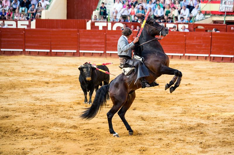 Bullfighting H15.jpg