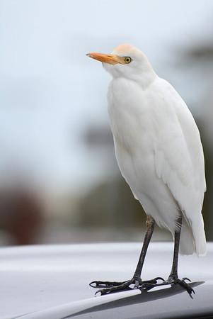 Birds of Florida 2014