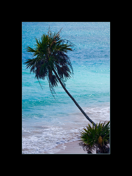palm tree small.jpg