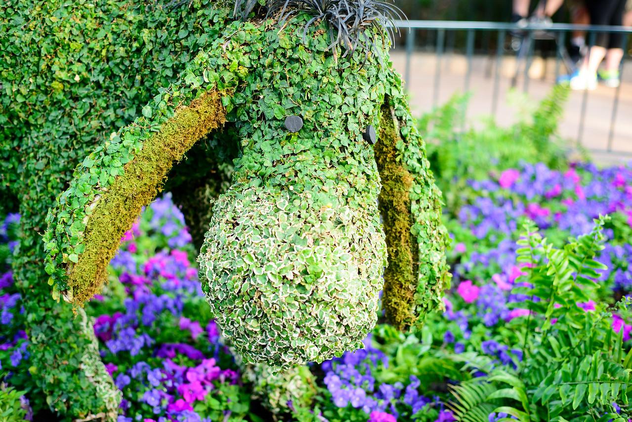 Eeyore Topiary - Epcot Flower & Garden Festival 2016