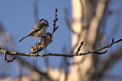 Birding 2021