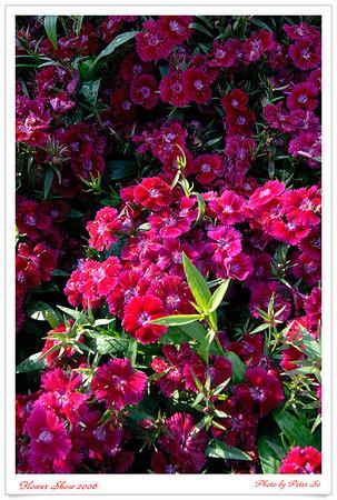 Flower Show 2006