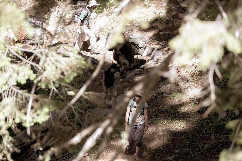 Jay Waltmunson Photography - Wallowa Llamas Reunion - 083.jpg