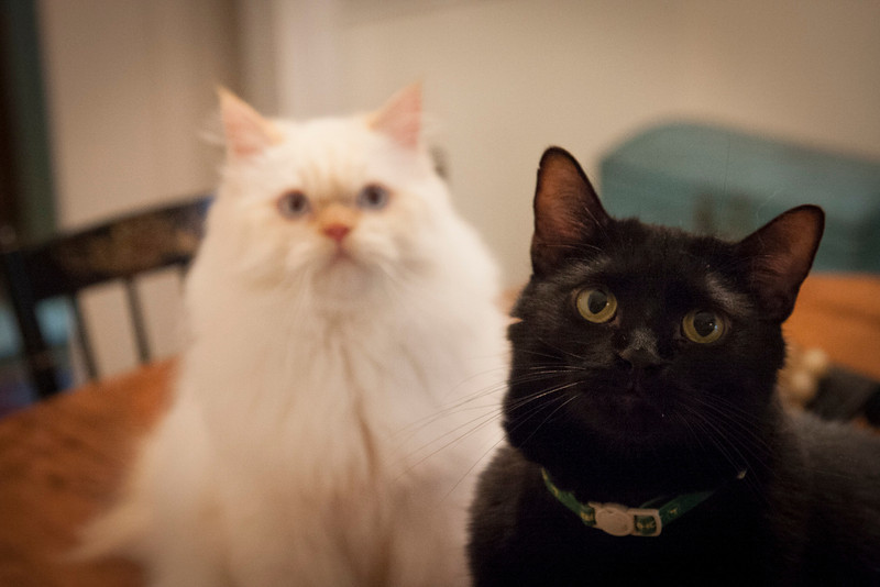 misc_cats_sep2013-7081.jpg