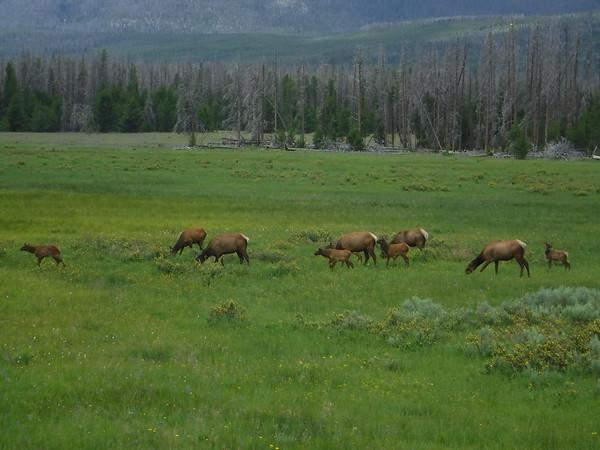 Wildlife & Nature Photography