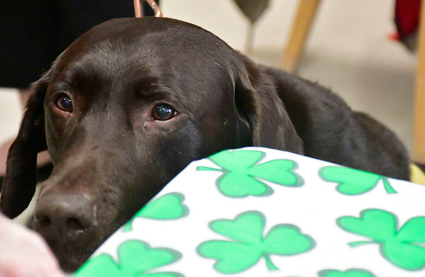 4/9/2019 Mike Orazzi   Staff Countryside Manor of Bristol volunteer Sharon Louchen's dog Quinn during an appreciation luncheon held on Tuesday afternoon.