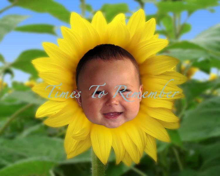 Sunflower_10x8.jpg