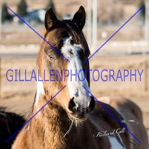 Wild West Ranch