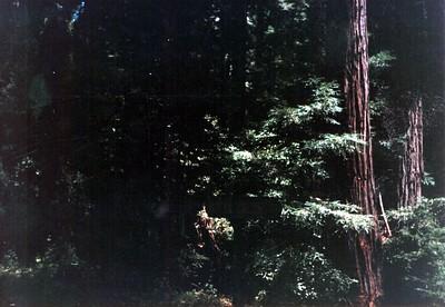 Big Trees Railroad