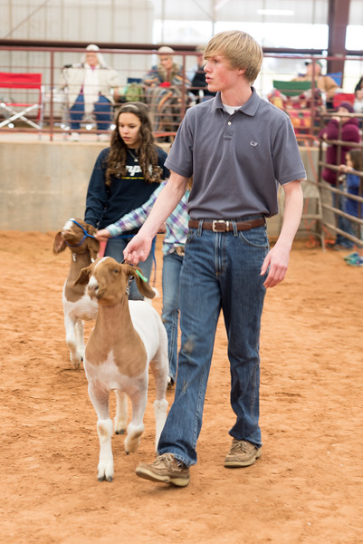 Hays-County-Show-6146.jpg