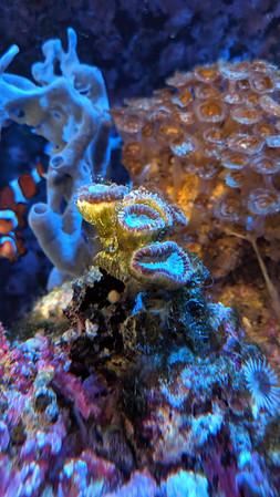 2019-09-07 - Reef Tank update - corals looking really bad