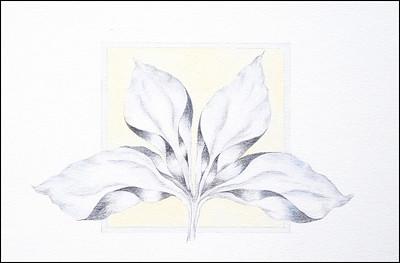 Imaginary Botanicals Series