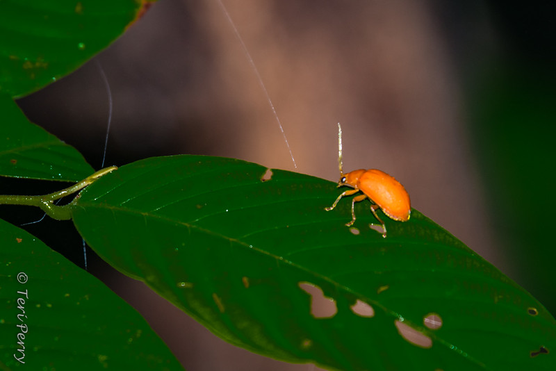 INSECT - -5715.jpg