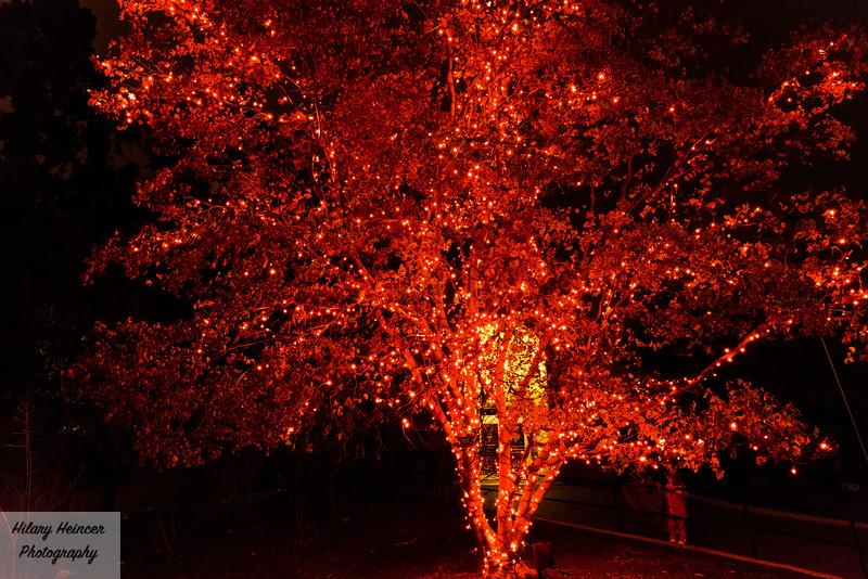 Christmas Lights-134.jpg