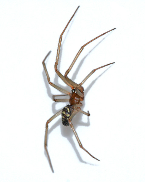 6481 Spider in sink.jpg