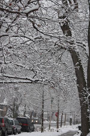 First Snow 2010