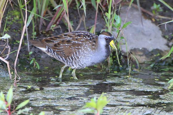 2009-08-29 Riverlands Migratory Bird Sanctuary