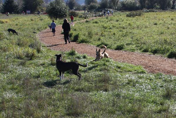 2010-10 Dog Park