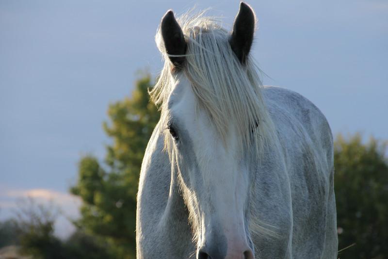 Beauty of Horses Gallery