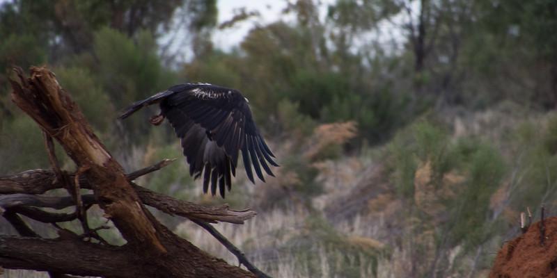 Nikolajsen-Gribdagen-Australia-49.jpg