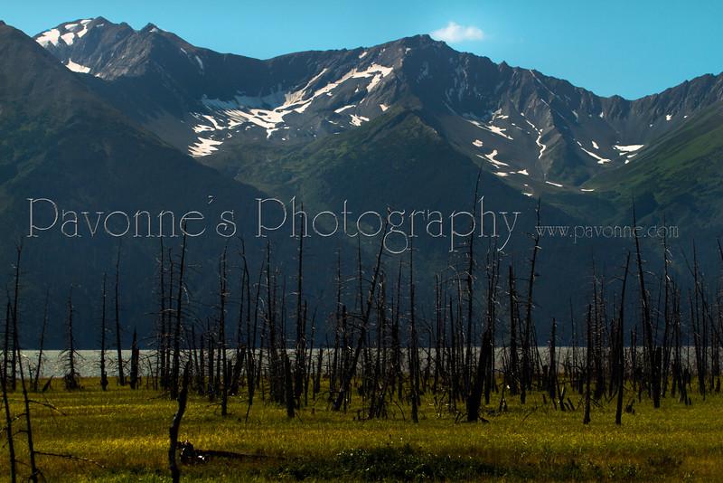 Alaska 5068.jpg