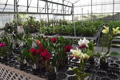 Akatsuka Orchid Gardens - Big Island, Hawaii 🔒