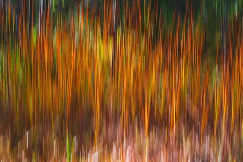 Wetland Grass in Autumn