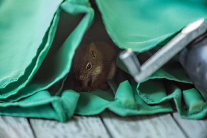 mouse hiding in table umbrella.jpg
