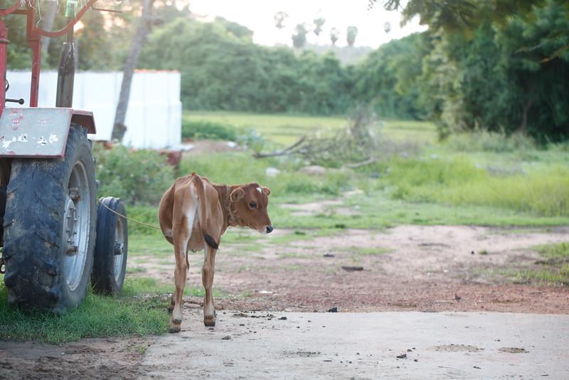 India2014-5169.jpg