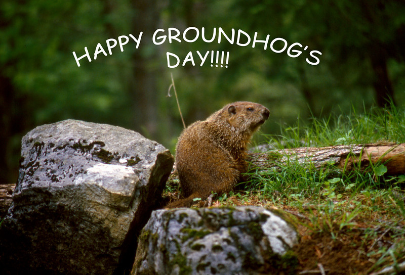 Kris and I were married on Groundhog's Day. We've been friends of the groundhog since then.