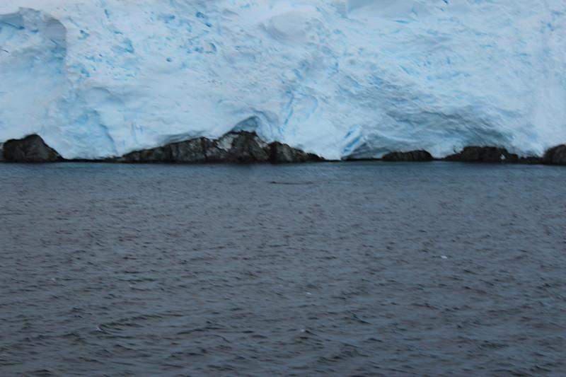 Antarctica 149.JPG