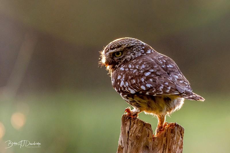 The Little Owl Shoot-6049.jpg