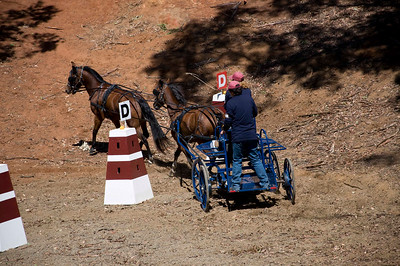 Victorian Carriage Driving Champs - Gallery 3