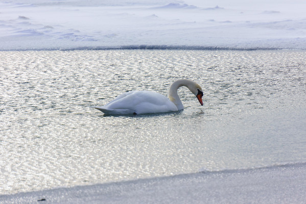 Canada Dec 2013
