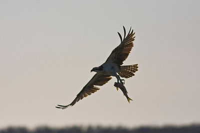 Aransas Wildlife Reserve 1-17-2009