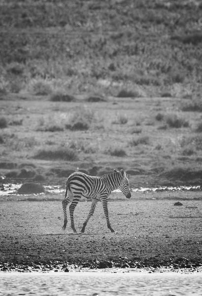 Tanzania_Feb_2018-369.jpg