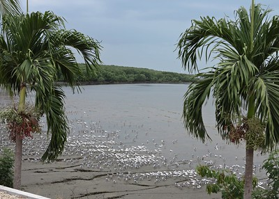 Panama/Caribbean3/16Panama