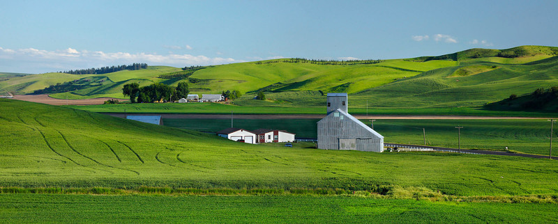 Panorama of wheat farms with barn and blue sky, Washington