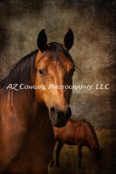 Equine & Western Fine Art