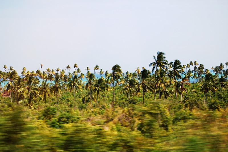 Zanzibar (37).JPG