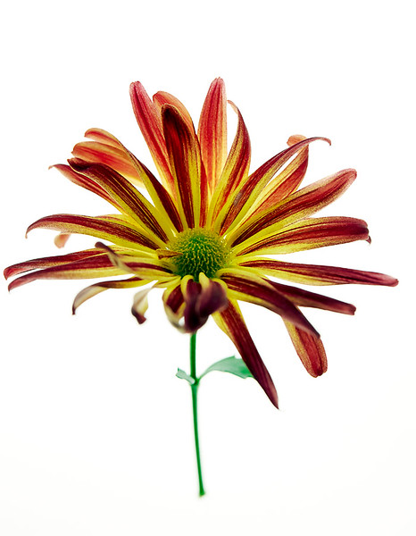 Flower_71I8536.jpg