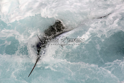 "2011 Sailfish Cup - ""Blue Time"""