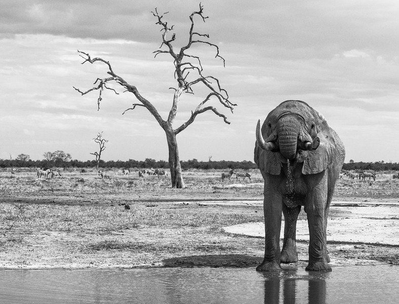 Elephants-24.jpg
