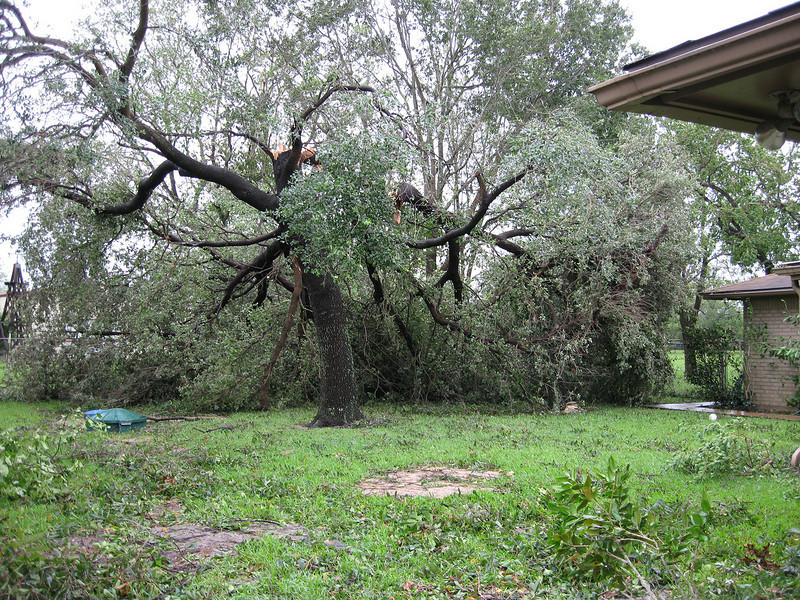 The large live oak that snapped in half in my parents back yard, just missing the garage.