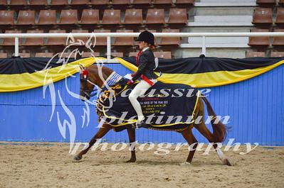 Class 12 Med Show Pony 12-13hh