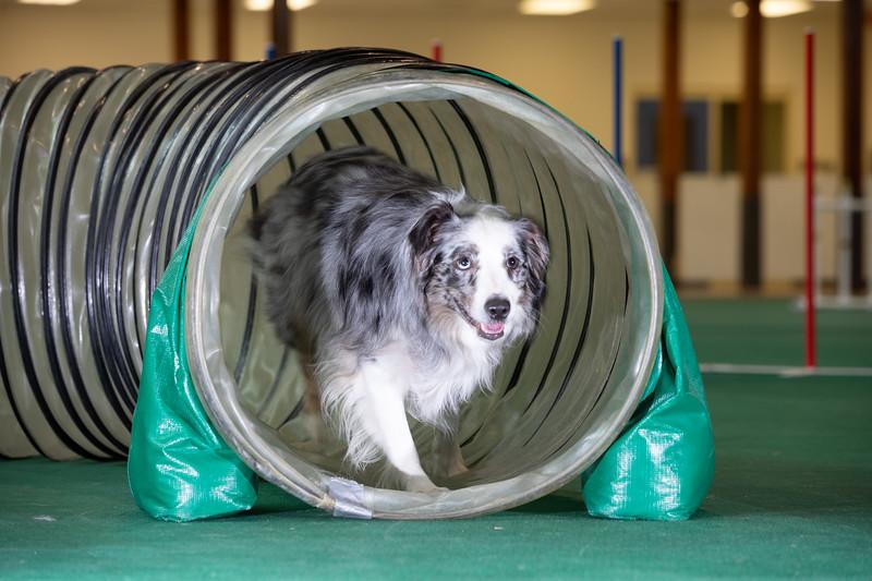 SPCA_Agility-68.jpg