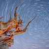 Bristlecone Pine with stars