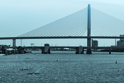 Regatta under cable-stayed bridge