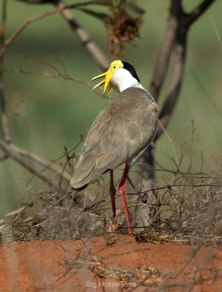 roebuck bay bird 14.jpg