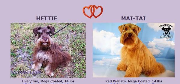 Hettie & Mai-Tai Puppies, DOB 5/14/2020
